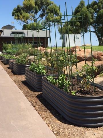Raised Garden Beds Adelaide Sa Raised Veggie Garden Beds Dingo