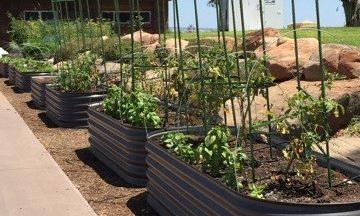 dingo garden tanks raised garden beds adelaide mollydooker wines australia mclaren vale veggie garden