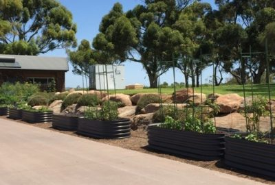 raised garden beds adelaide tomatoes sa