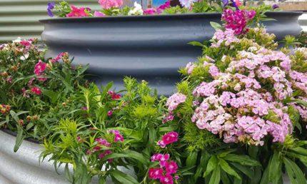 raised garden beds adelaide flower garden beds adelaide aquaponics wicking bed vegetable garden veggie bed herbs grow bed