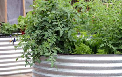 round steel raised garden beds adelaide south australia self sustainable living sa