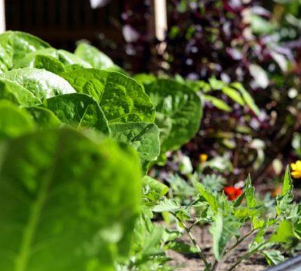 raised garden beds adelaide sa buy garden beds